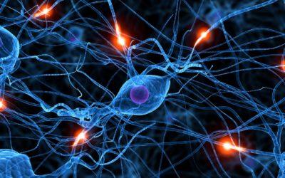 Propriocepcja a joga część 1 – Receptory proprioceptywne